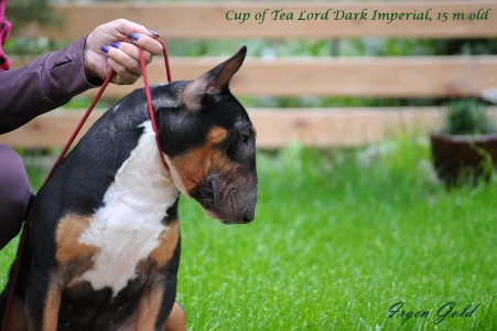 CUP OF TEA LORD DARK IMPERIAL