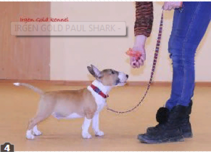 IRGEN GOLD PAUL SHARK